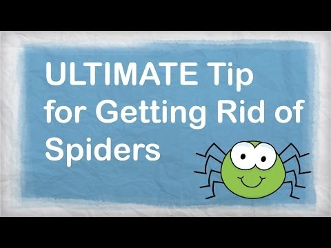 How To Get Rid Of Spiders Under Your Car